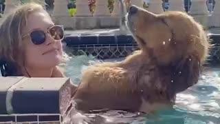 dog enjoys receiving massage inside jacuzzi - dog enjoys receiving massage inside jacuzzi -