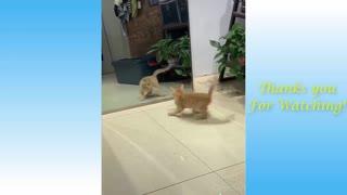 Funny Animals cat cat