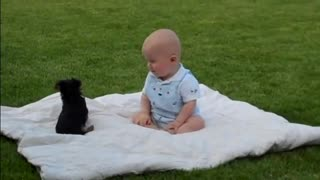 When Puppies Attack: Puppy Attack