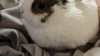 Chuck Bunny...4