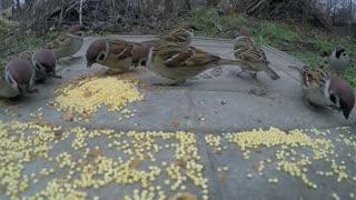 Birds eat food in the garden.