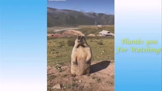Funny animals 0