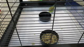 The green parrot is in a cage.