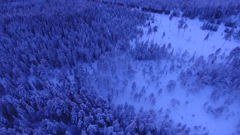 Beautiful snowy forest