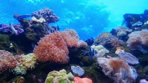 Great fish scenery in the sea