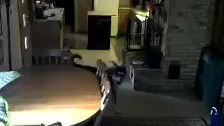 Table huskey