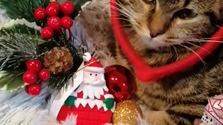 Christmas cat video
