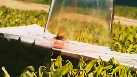 Bumblebee rescue.