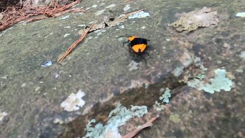 Strange Love Bugs