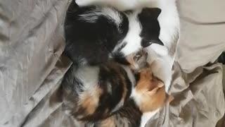 Sleeping momma and kittens