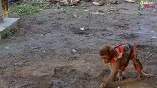 world of wild animals Monkey Meeting King Lion