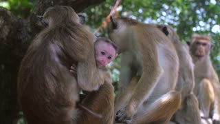 monkey family in forest