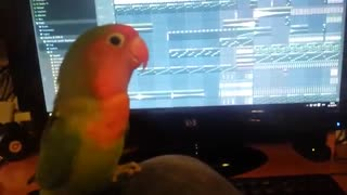 PArrot sing with insturment