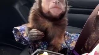 Cute thief steals food