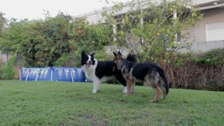 Dog Reunites With His Long-lost Brother After 2 Years