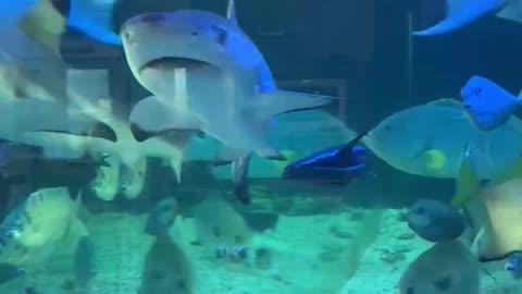 It's a private aquarium, but it's magnificent.