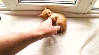 Cute Little Kitty Cat