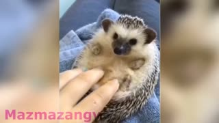 Animais estranhos e fofos ao mesmo tempo