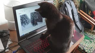 Cat is really interested in Wim Hof method! Funny video