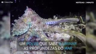 Este polvo parece uma discoteca sub-aquática