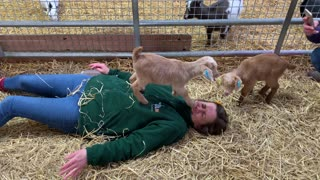 Tiny Goat Stomps Woman's Face