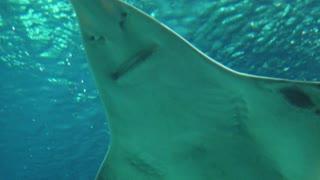 Shark etrange