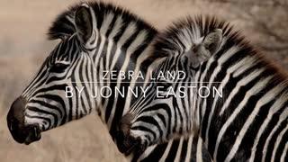 Wildlife Zebra Land - Amazing Wild Creatures