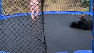 Toddler and Doggy Enjoy Trampoline Time Together