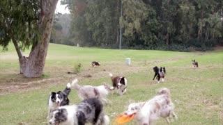 DOG: Buddies