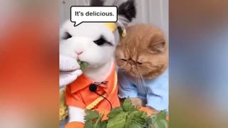 Rabbit And Cat Eating Moment Meme Funny