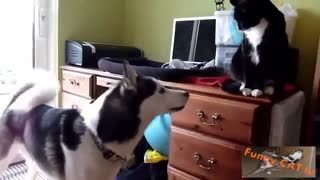 First Time Cats and Dogs Meeting