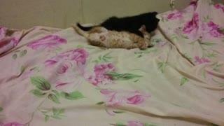 My little kittens in bed
