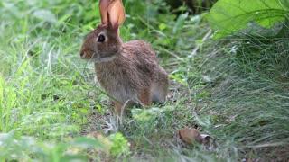 Lovely little rabbit 2021