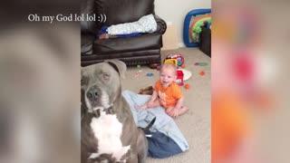 Funniest & Cutest - Funny Puppy Videos 2020
