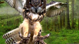 Beautiful Owls on Planet Earth