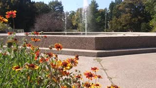 Water Fountain Relaxing Splashing Water Sounds Flowers with Bees Beautiful Autumn Nature ASMR Sleep
