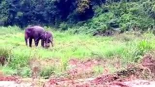 The little elephant is happy to meet a friend.