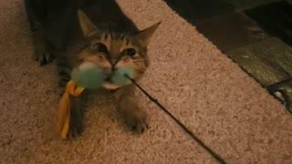 Ohhhhhh !!!!!My cat thinks he's a dog