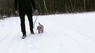 So Cute Puppy Golden Retriever
