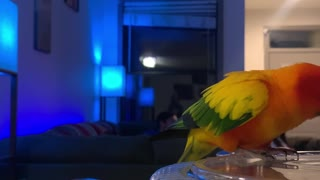 Parrot Doesn't Know He's Being Recorded Stealing