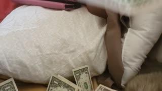Money!! Money!!