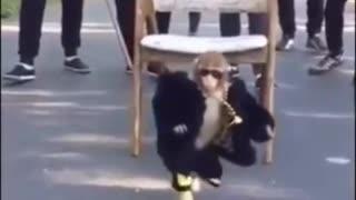 Majestic Monkey