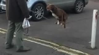 Dog Shows Amazing Acrobatics