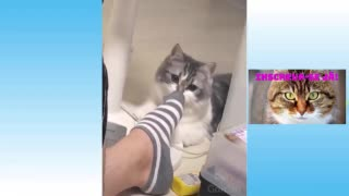 Dogs and cats taking scares
