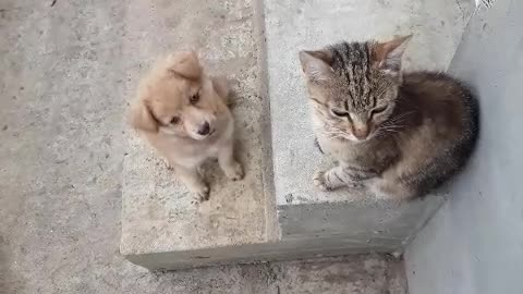 The dog found the cats👇