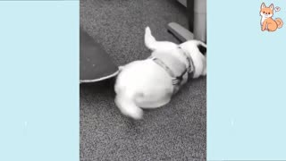 Baby dogs life compilation