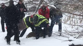 Deer Rescued from Colorado Reservoir