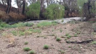 Namoi River Reborn After Heavy Rain