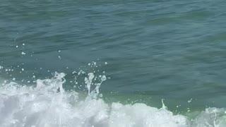 Beach Swimming Along Close to Shore