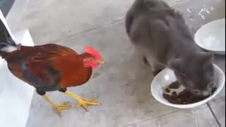 Funny Animals | Sharing is Caring | Cute Interaction